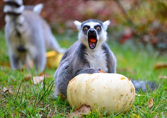 Пражский зоопарк повышает цены на билеты