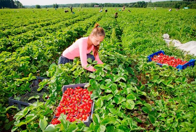 Глава кризисного штаба Чехии: безработные смогут трудиться в сельском хозяйстве