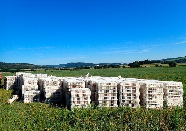 Чехи поддерживают запрет на выращивание животных и птицы в клетках