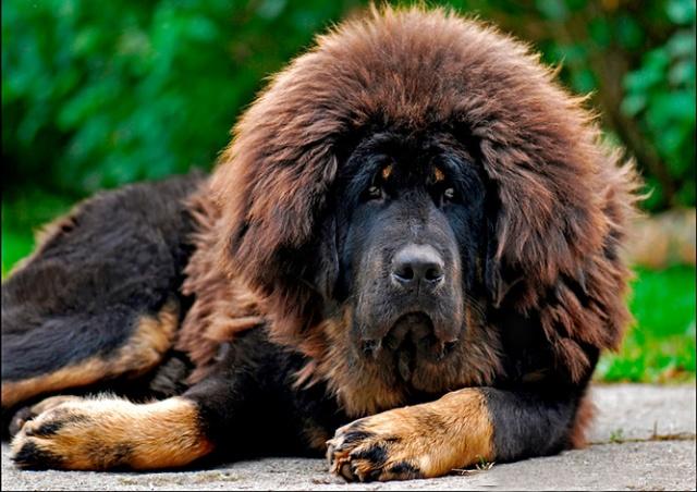 В Чехии запустили государственную онлайн-базу потерянных и найденных собак