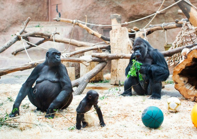 Пражский зоопарк объявил бесплатный вход для школьников и студентов