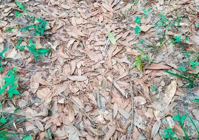 «Загадочная» фотография из леса озадачила интернет-пользователей