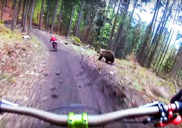 За чешским велосипедистом в лесу погнался медведь: видео