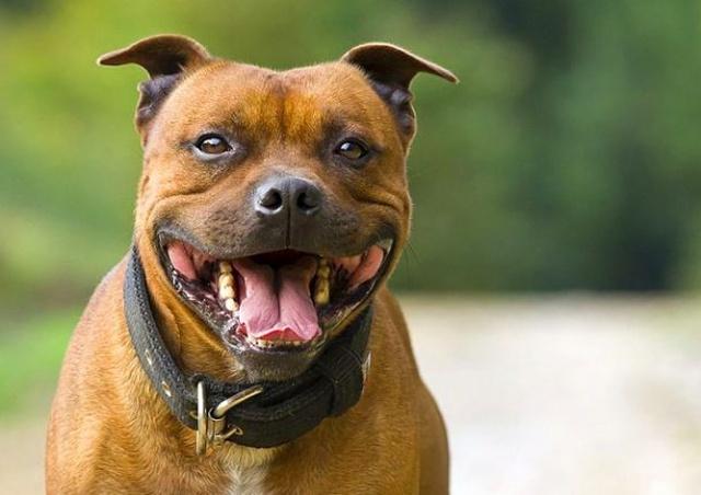 В Чехии пассажир вез собаку без намордника и сам покусал контролера