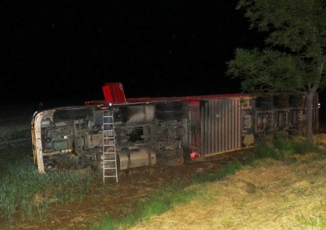 В Чехии пьяный водитель-иностранец опрокинул грузовик с коровами