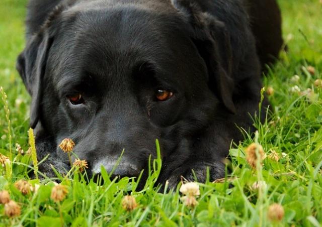 Полиция Чехии расследует убийство собаки