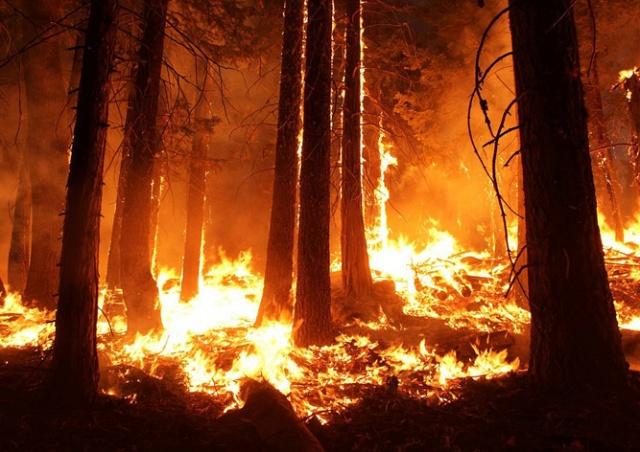 В Италии пожарные сами поджигали лес ради бонусных выплат