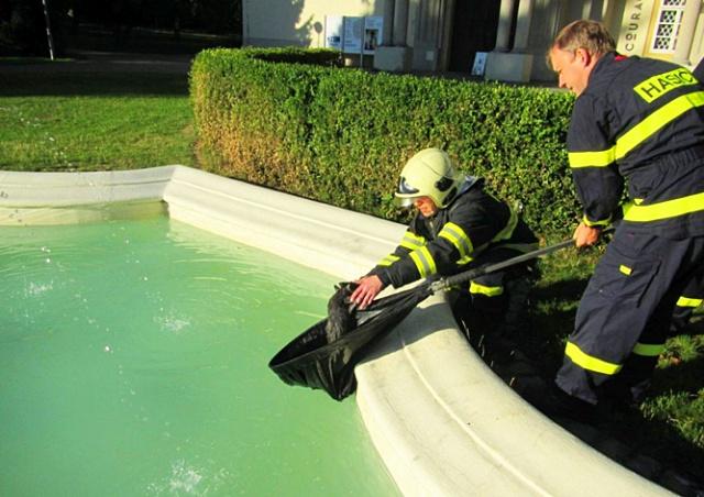 Чешские пожарные спасли из фонтана котенка