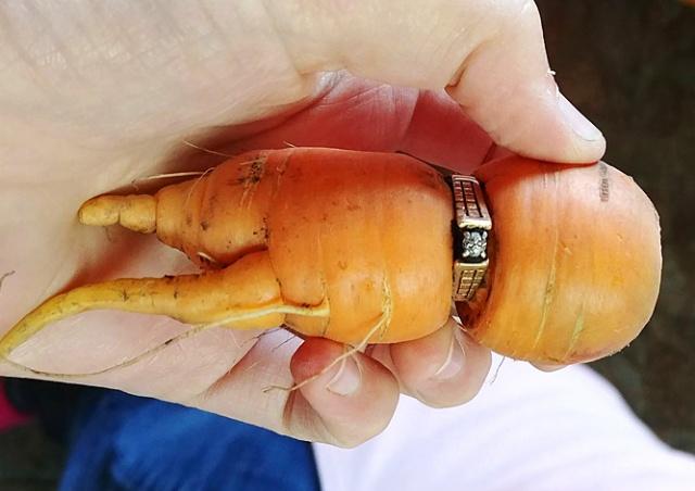 Потерянное обручальное кольцо нашлось на морковке 13 лет спустя