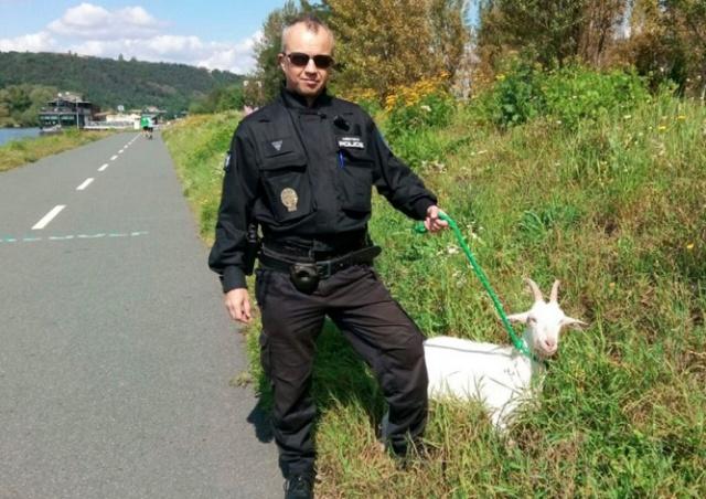 Пражские полицейские спасли из реки козу