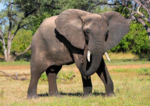 Чешская полиция закрыла дело о «слоне-грабителе»
