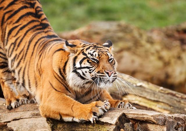 Пражский зоопарк признан одним из лучших в мире