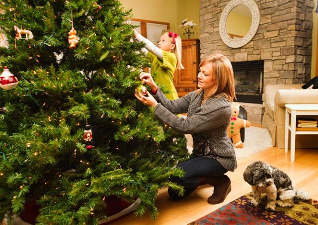 В Праге придумали, как «спасти жизнь» рождественским ёлкам