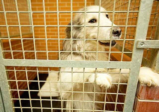 Пражанам предложили поздравить бездомных собак с Рождеством