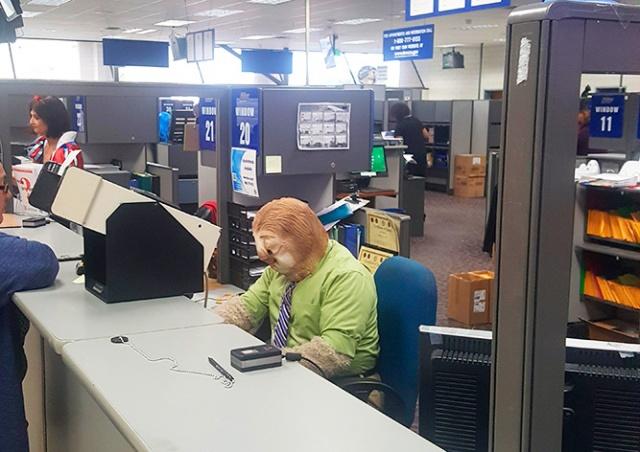 В США чиновник пришел на работу в костюме ленивца