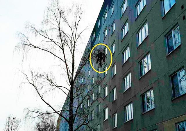 В Чехии пожарным пришлось снимать с дерева рождественскую ёлку