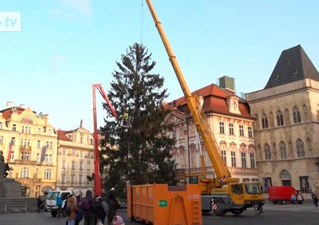 Главную рождественскую елку Чехии скормят слонам: видео