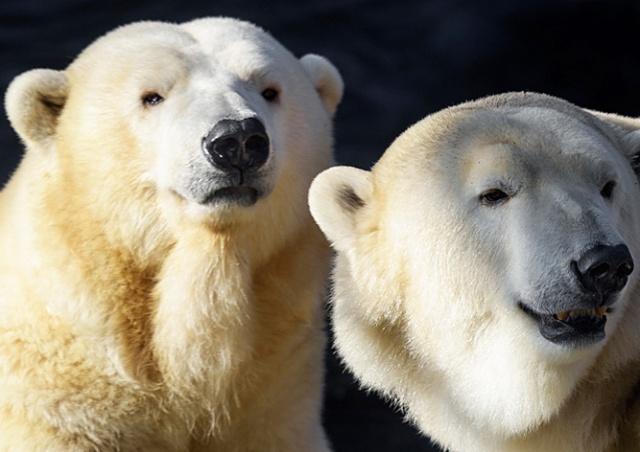 В субботу Пражский зоопарк можно посетить за 1 крону