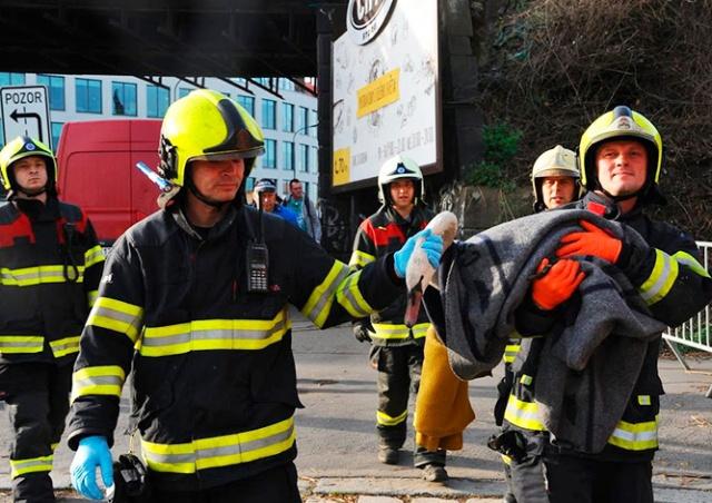 В Праге пожарные спасли застрявшего на мосту лебедя