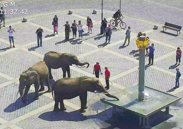 В Чехии полицейские разогнали «митинг» слонов: видео