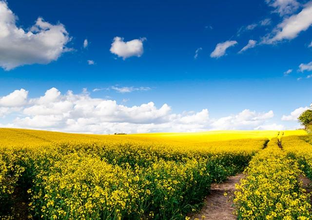 Ученые рассказали о происхождении желтой пыльцы, засыпавшей Чехию