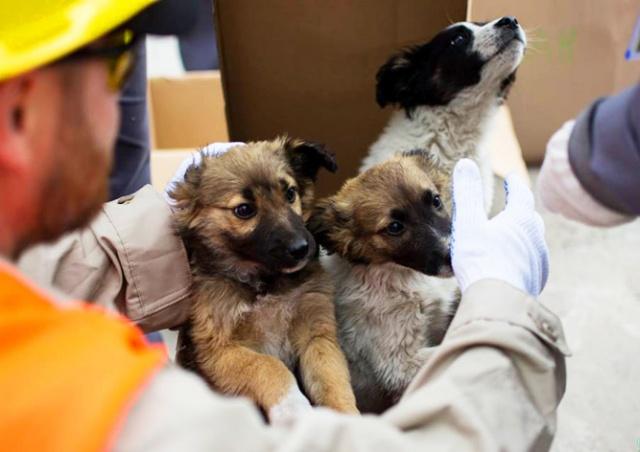 США приютят 200 бездомных щенков из Чернобыля