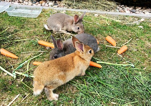 Дикие кролики «оккупировали» пражский район