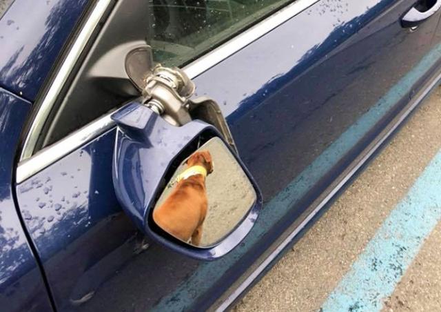 В Праге вандал сломал зеркала у 12 машин