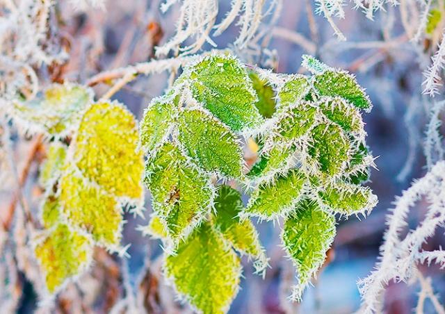 В Чехии зарегистрировали мороз в -5°C