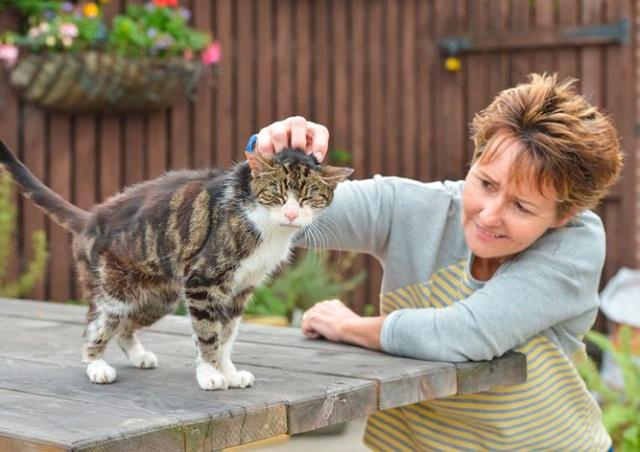 Пропавшая кошка воссоединилась с хозяйкой спустя 13 лет