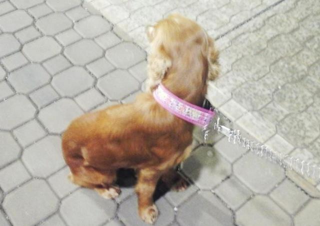 В Праге собака убежала от хозяина и на поезде доехала до Пардубице