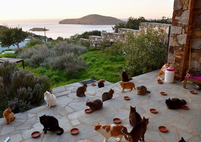 Идеальная вакансия:  ухаживать за кошками на греческом острове