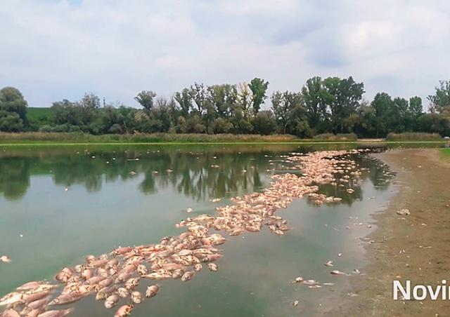 За ночь в чешском пруду погибли тысячи рыб