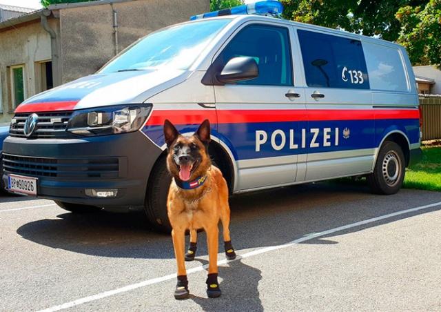 Полицейским собакам в Вене выдали ботинки для защиты от жары