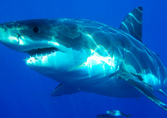 Акула напала на чешского туриста в Египте