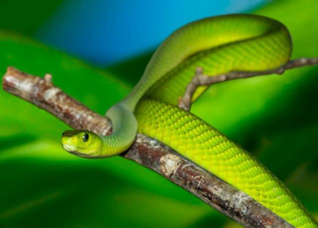 Полиция предупредила пражан о сбежавшей ядовитой змее
