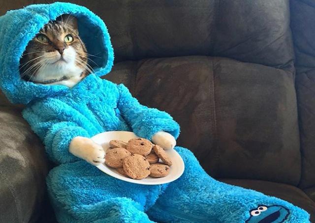 Госдеп США по ошибке разослал приглашения на встречу с котом в пижаме