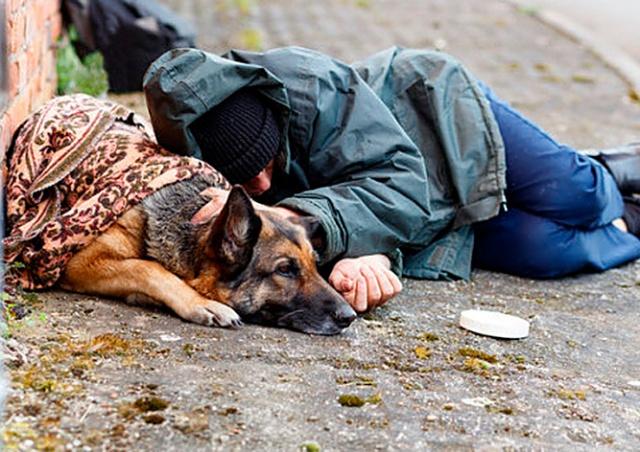 Прага предложила бездомным бесплатно привить их собак