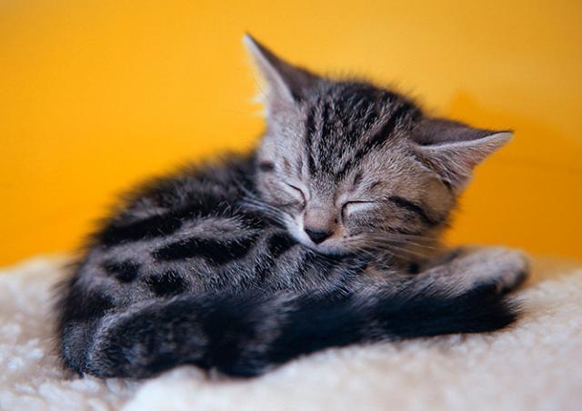 В Праге пройдет выставка бездомных кошек