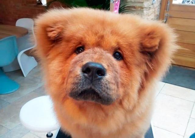В Британии щенка посадили в тюрьму за укус полицейского