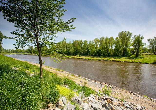 Прагу «охладят» с помощью новых водоемов и миллиона деревьев