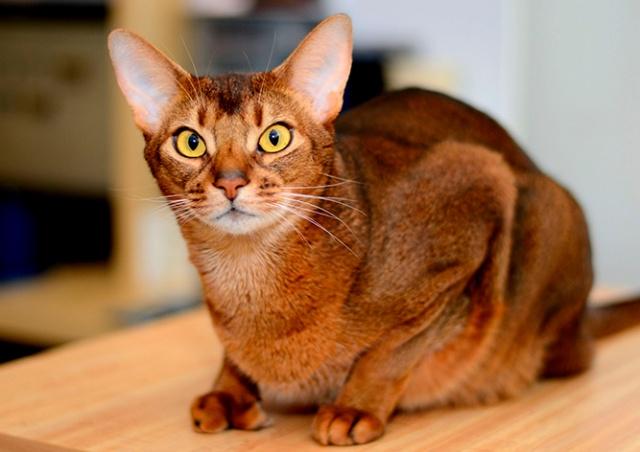 Жительница Чехии заявила в полицию на собственную кошку