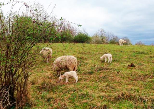 «Живые газонокосилки» вернулись в Прагу