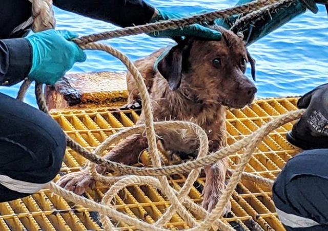 Истощенного пса нашли в открытом море за 200 км от берега