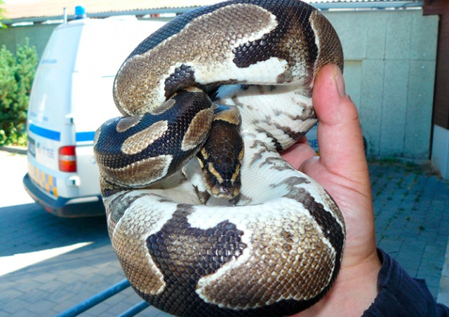 Чешской семье ночью в квартиру заползла змея