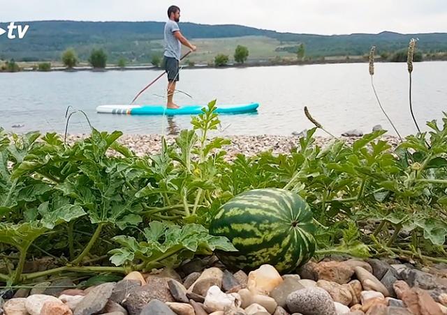 На берегу чешского озера внезапно вырос арбуз