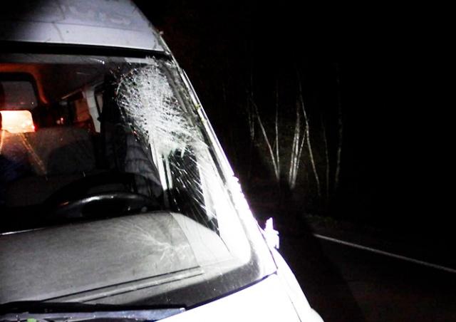 В Чехии бобр уронил дерево на проезжавший автомобиль