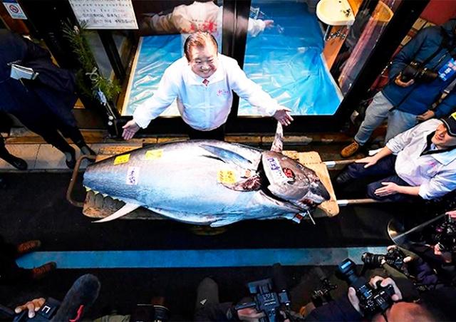 На торгах в Японии голубого тунца продали за $1,8 млн