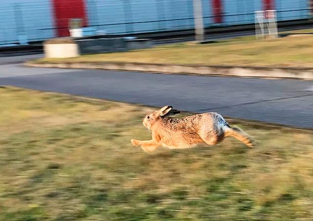 На территории чешской АЭС «Темелин» поймали 20 зайцев
