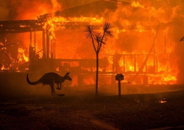 Чехи вносят свой вклад в помощь горящей Австралии